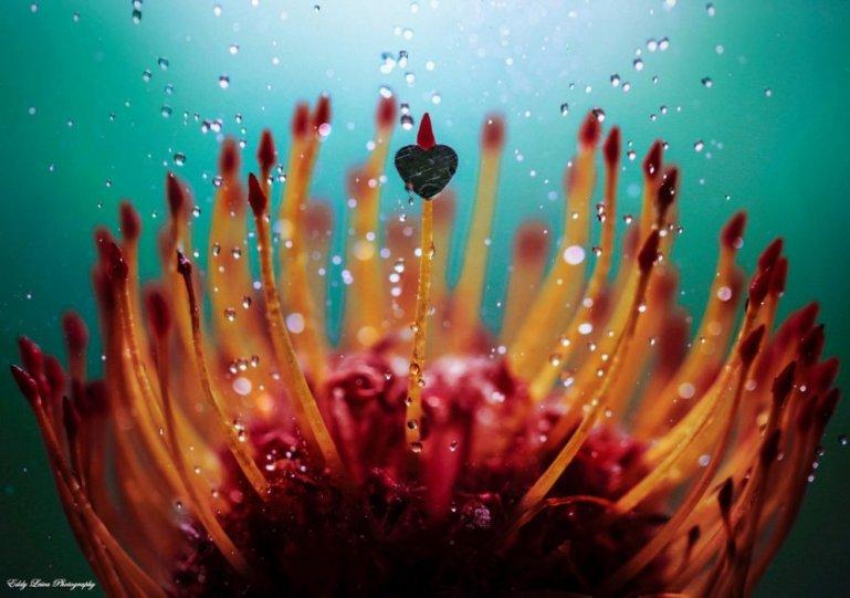 Экстраординарные фотографии цветов - №1