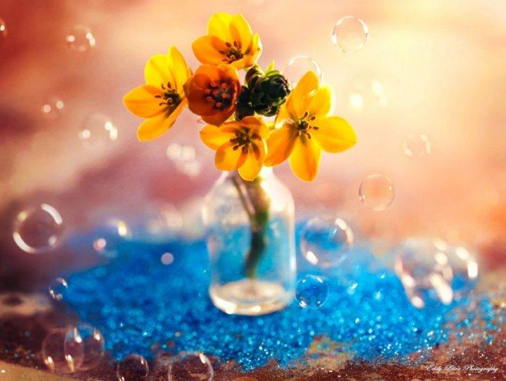 Экстраординарные фотографии цветов - №5