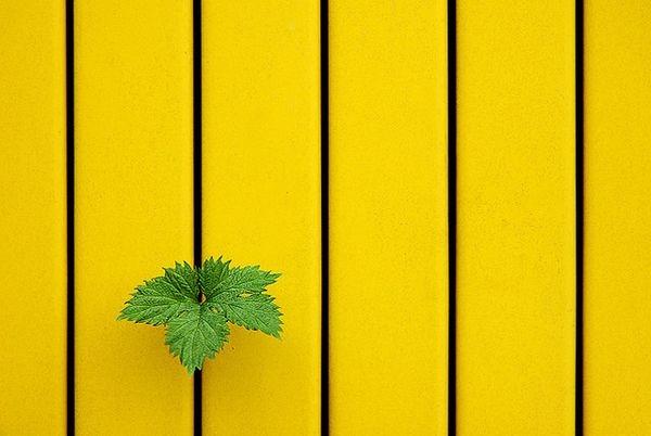 Отрицательное (негативное) пространство в фотографии - №1