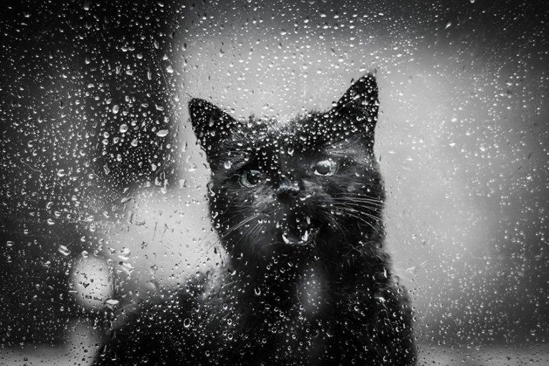 Фото: Дон Яковбски