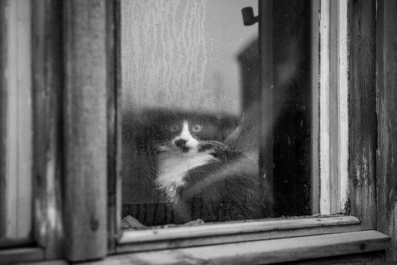 Фото: Алексей Иванов