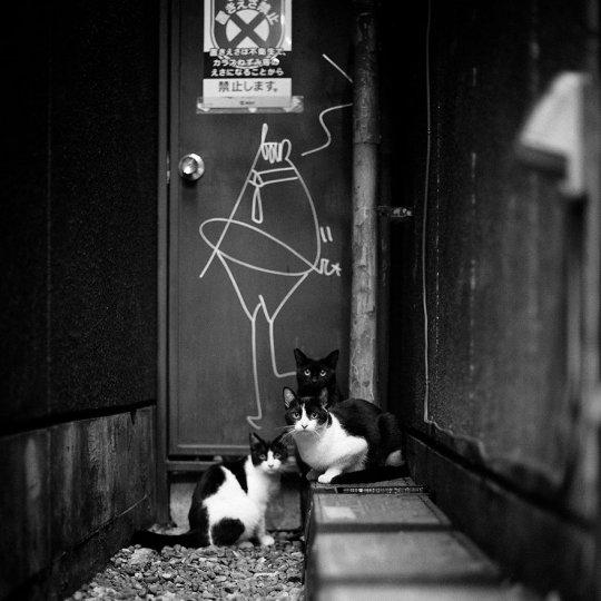 Фото: Саймон Ли