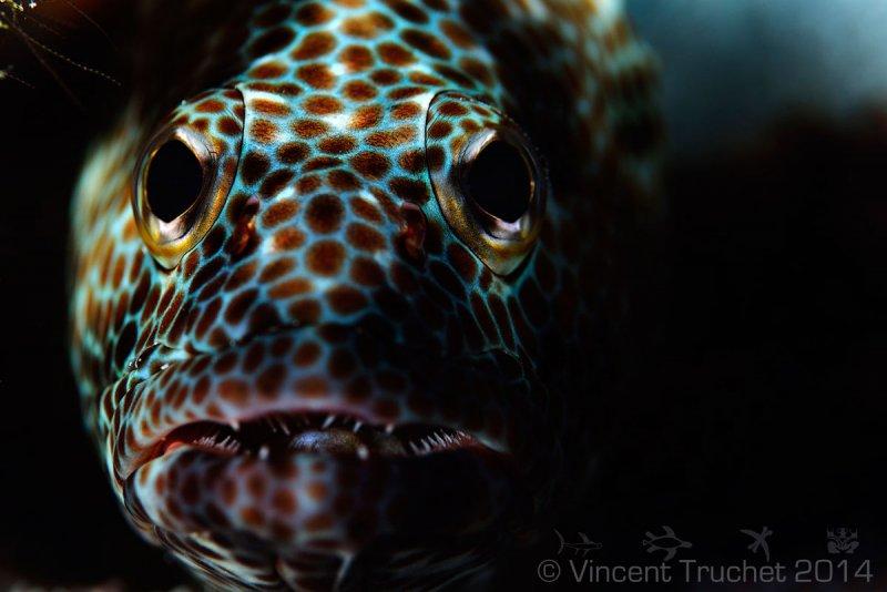 Подводные фотографии Винсента Трюше - №2
