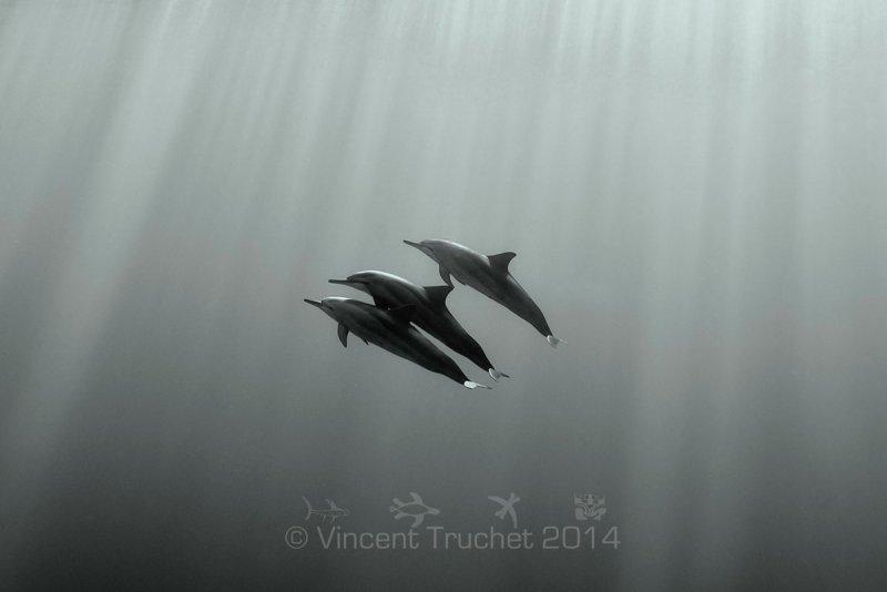 Подводные фотографии Винсента Трюше - №6