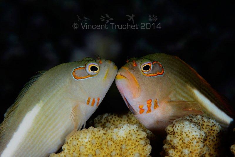 Подводные фотографии Винсента Трюше - №8