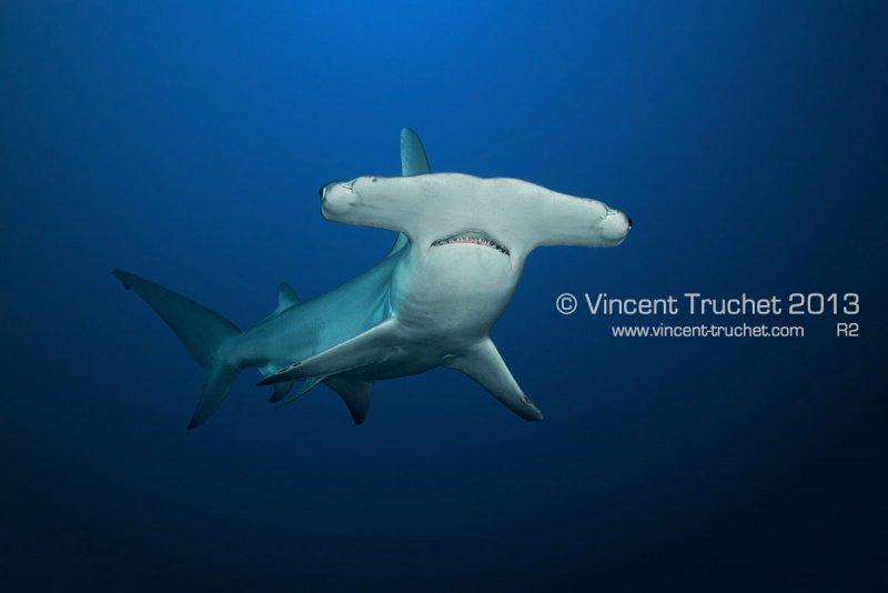 Подводные фотографии Винсента Трюше - №12