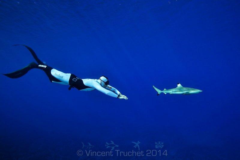 Подводные фотографии Винсента Трюше - №18