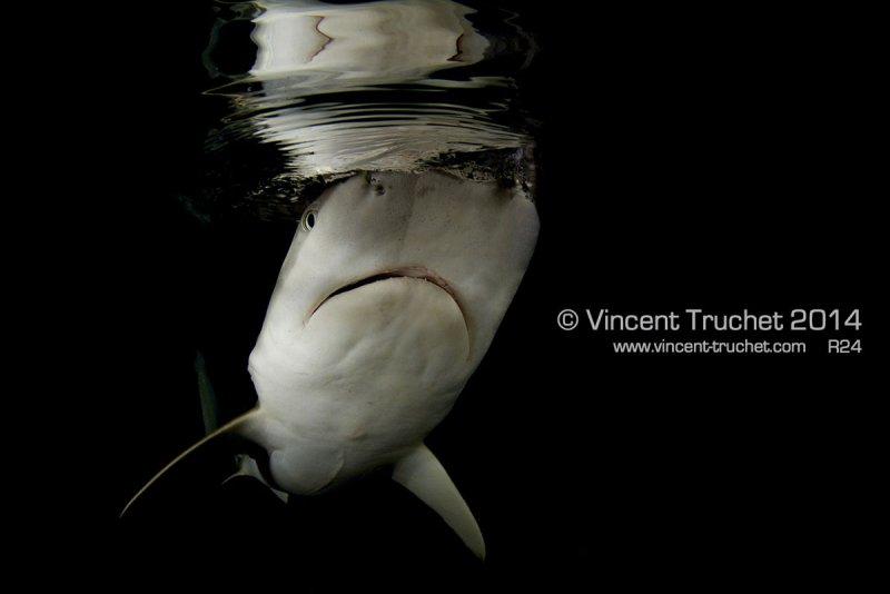 Подводные фотографии Винсента Трюше - №22