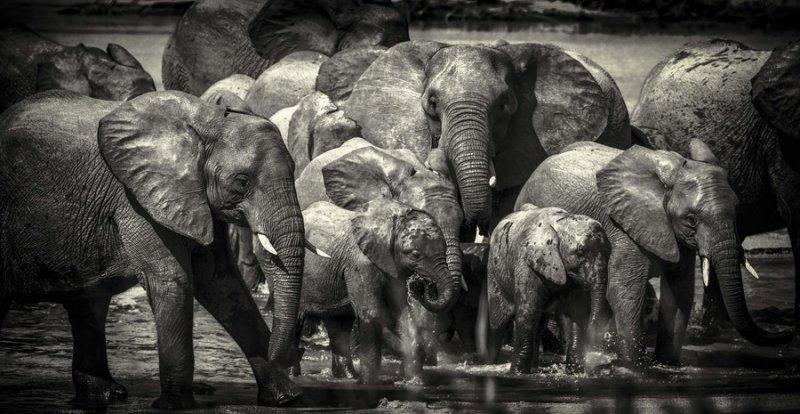 Семья переходов через реку. Автор фото: Крис Фишер