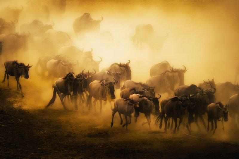 Автор фото: Мохаммед Алназир