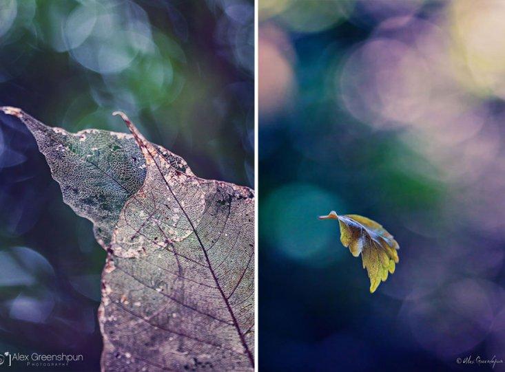 Волшебство осени в фотографиях Александры Гриншпун - №17