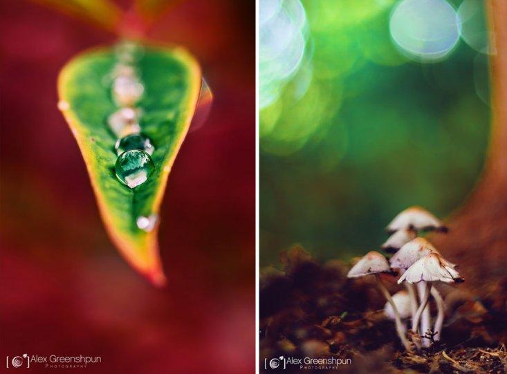 Волшебство осени в фотографиях Александры Гриншпун - №18