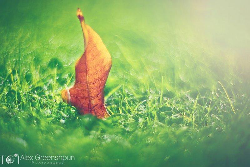 Волшебство осени в фотографиях Александры Гриншпун - №3