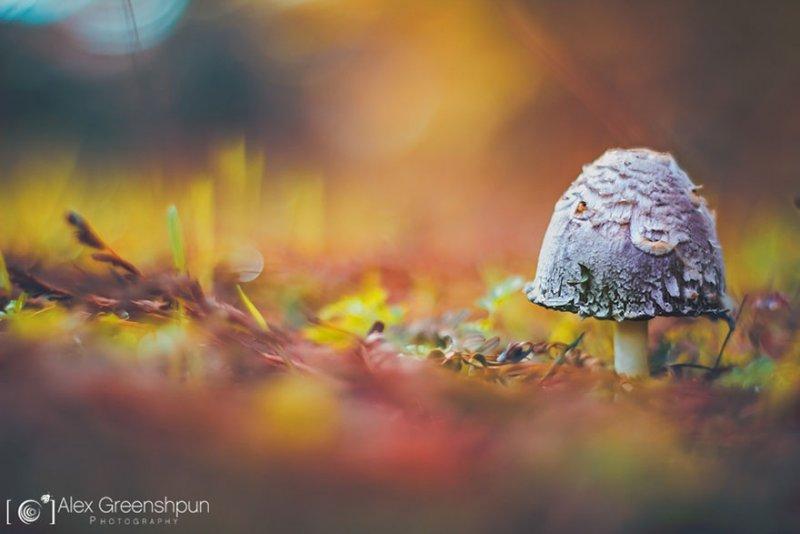 Волшебство осени в фотографиях Александры Гриншпун - №5