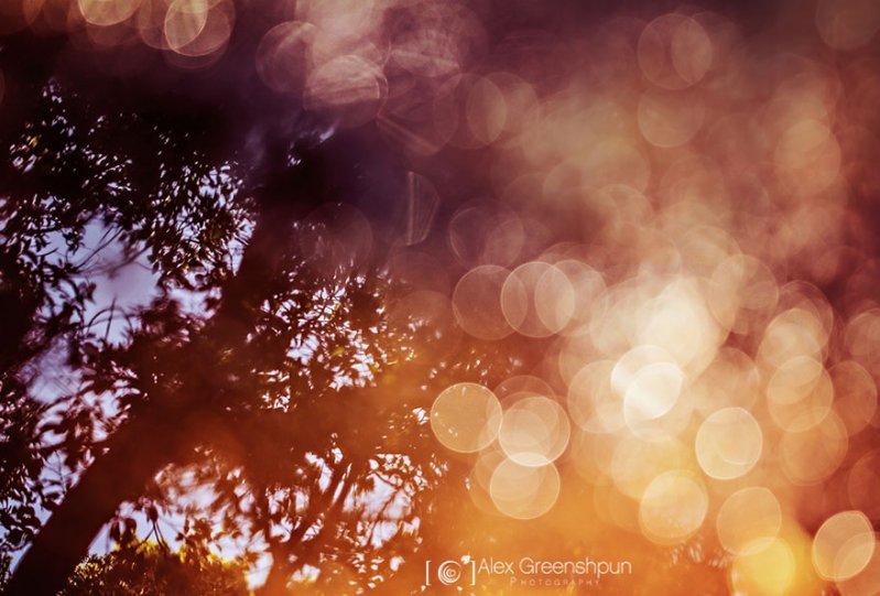 Волшебство осени в фотографиях Александры Гриншпун - №6