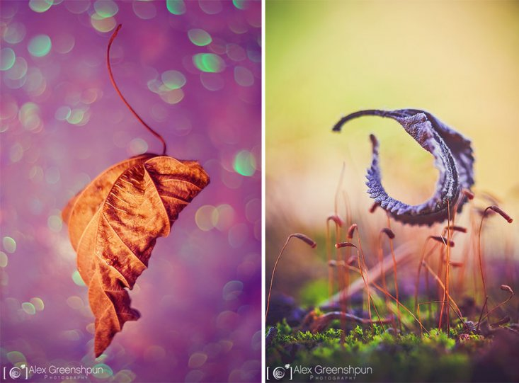 Волшебство осени в фотографиях Александры Гриншпун - №21