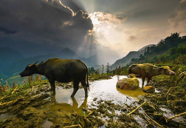 Великолепные рисовые террасы Вьетнама - №1
