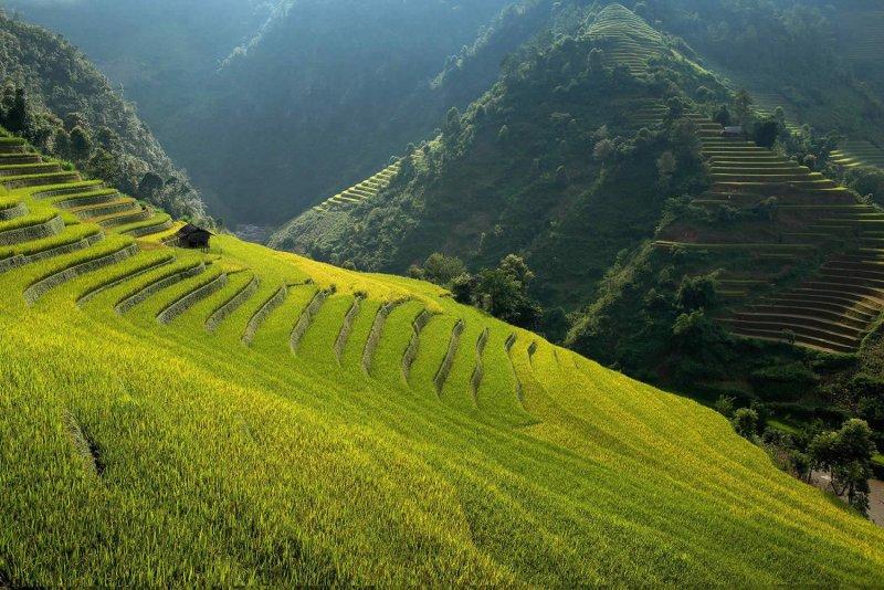 Великолепные рисовые террасы Вьетнама - №5
