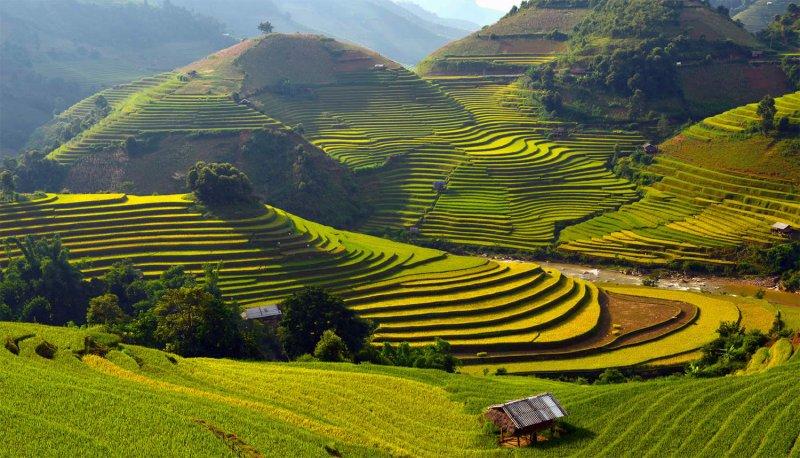 Великолепные рисовые террасы Вьетнама - №7
