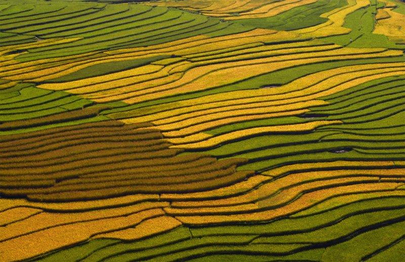 Великолепные рисовые террасы Вьетнама - №9