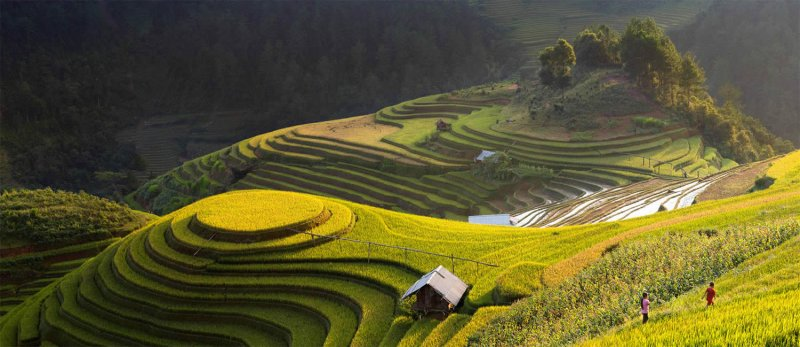 Великолепные рисовые террасы Вьетнама - №11