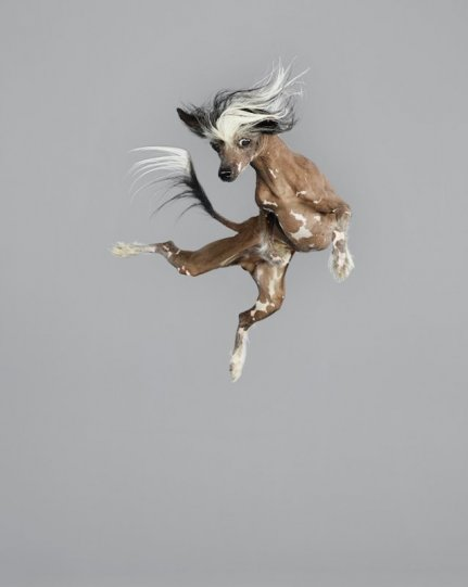 Фотографии собак в прыжке от Джулии Кристе - №4