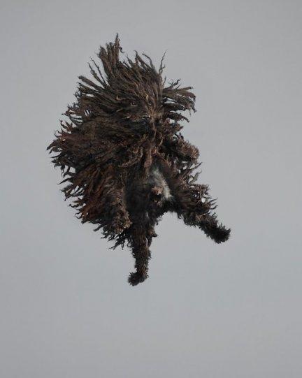 Фотографии собак в прыжке от Джулии Кристе - №6