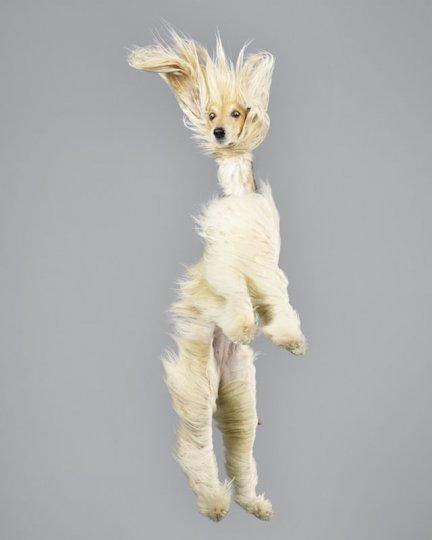 Фотографии собак в прыжке от Джулии Кристе - №8