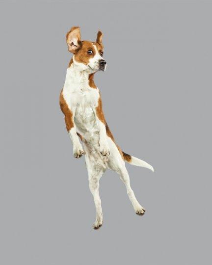 Фотографии собак в прыжке от Джулии Кристе - №12
