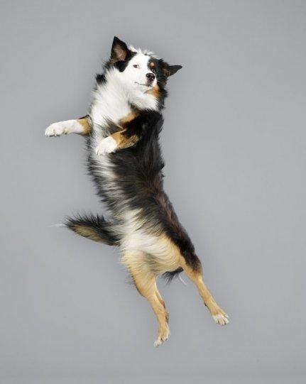 Фотографии собак в прыжке от Джулии Кристе - №16