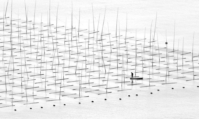 Туго Ченг  «Прибрежная геометрия» - №6