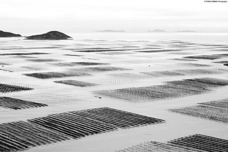Туго Ченг  «Прибрежная геометрия» - №8