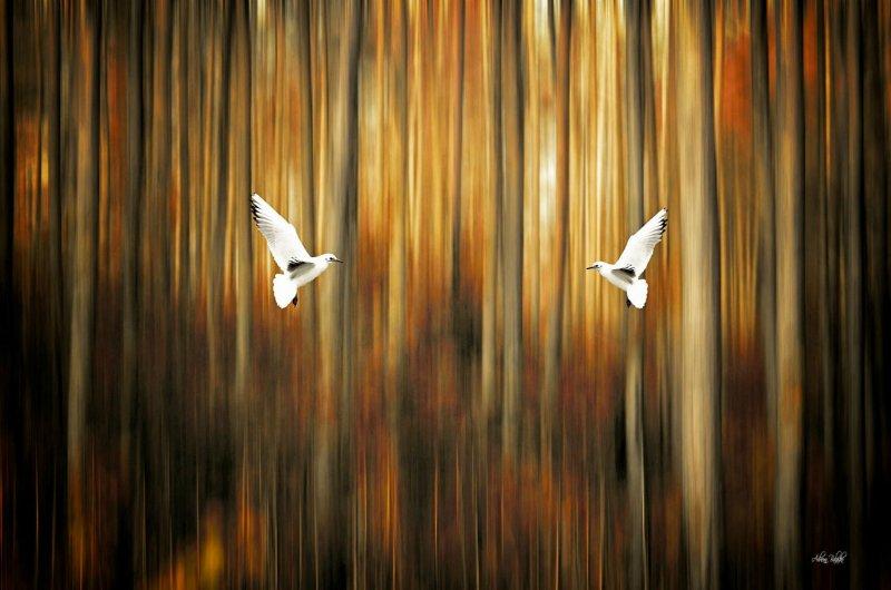 Симметрия и минимализм в фотографиях Адриенн Баласко - №6