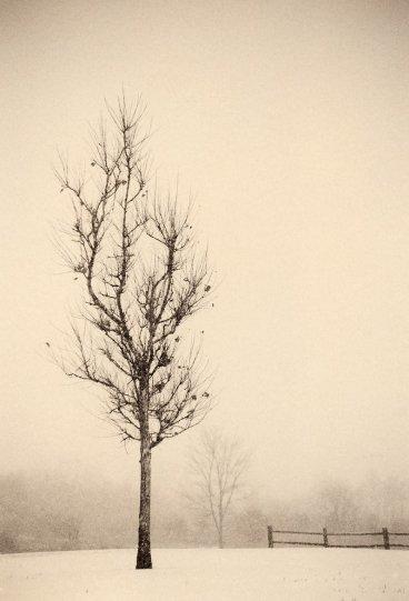 Фотограф Пол Козал - №6