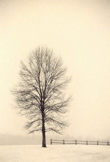 Фотограф Пол Козал - №17