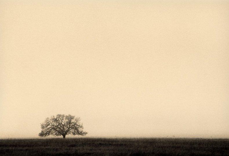 Фотограф Пол Козал - №25