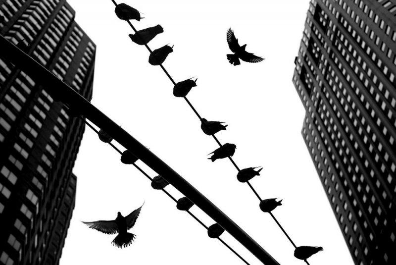Уличный фотограф и журналист Алан Шаллер - №2