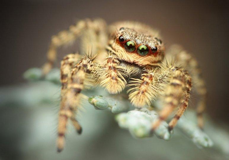 Финалист. Прыгающий паук. Автор фото: Ричард Кубица.