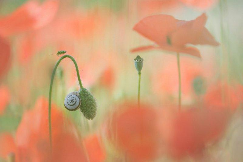 Поощрительная премия. Это - маленткий мир. Автор фото: Труи Хеинуис.