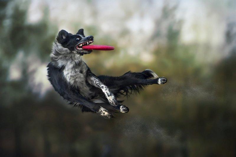 Собаки в фотографиях Клаудио Пикколи - №7