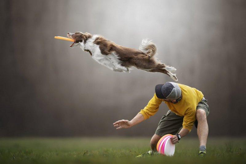 Собаки в фотографиях Клаудио Пикколи - №9