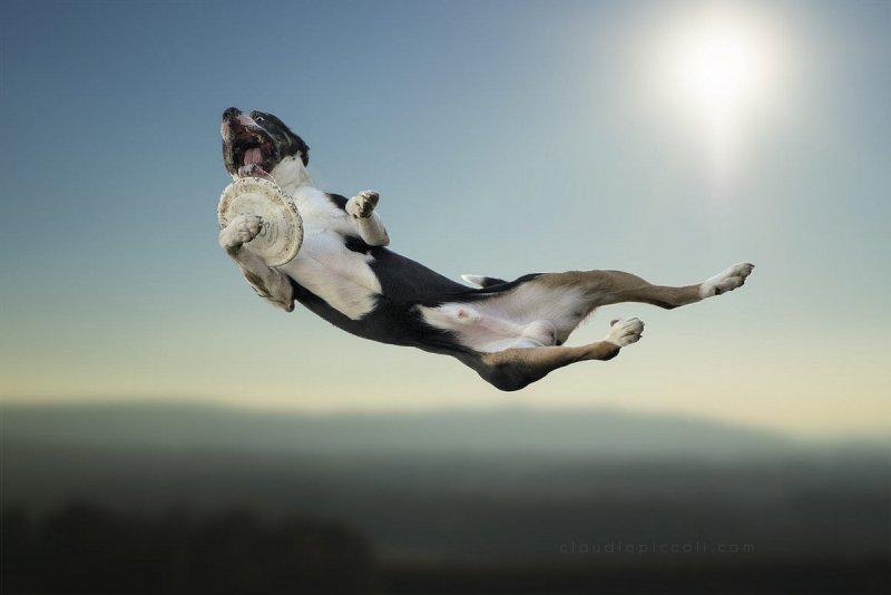 Собаки в фотографиях Клаудио Пикколи - №10