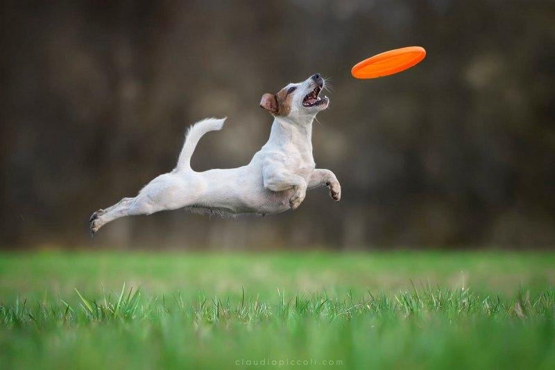 Собаки в фотографиях Клаудио Пикколи - №15
