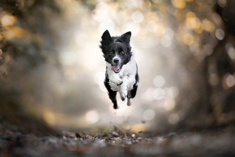 Собаки в фотографиях Клаудио Пикколи - №19