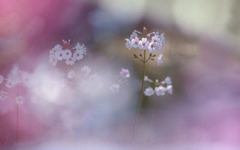 Цветы - главные герои кадра - №10