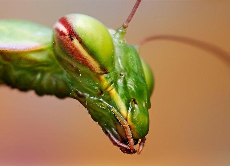 Мир насекомых - №7
