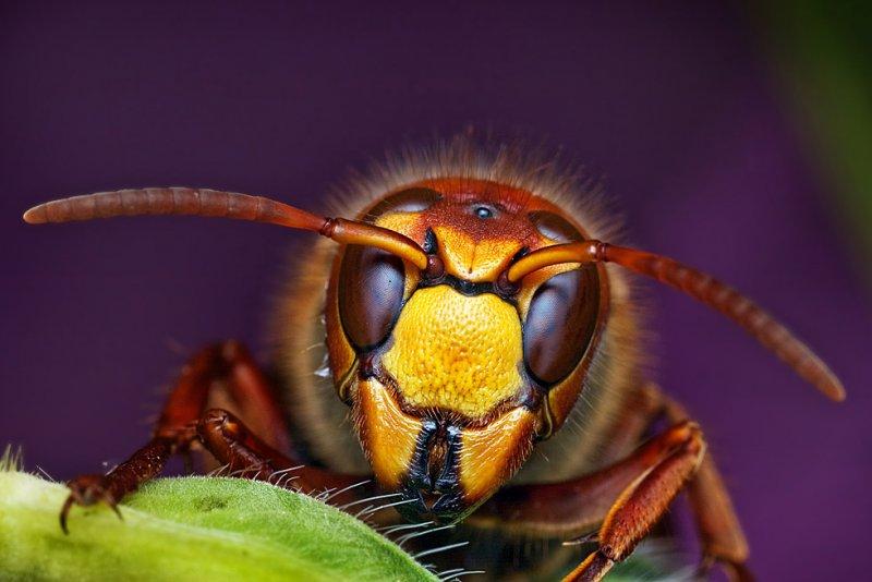 Мир насекомых - №3