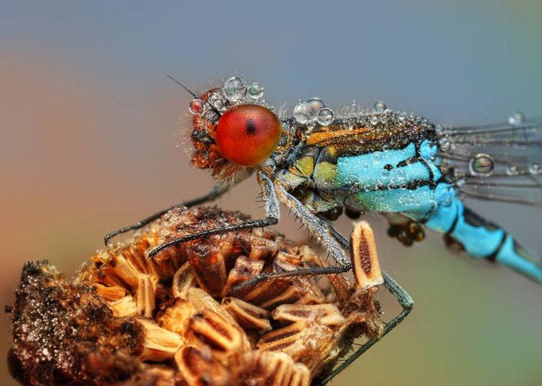 Мир насекомых - №10