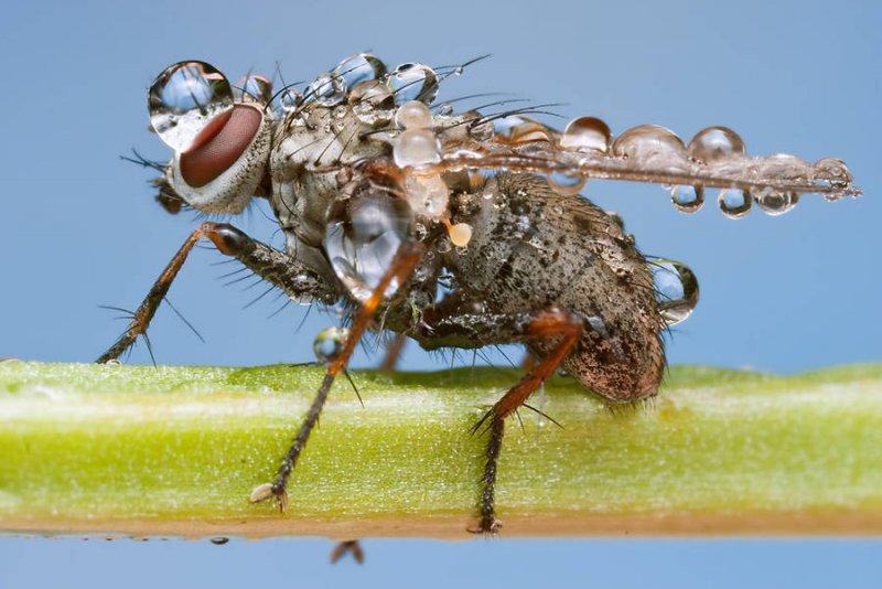 Мир насекомых - №1