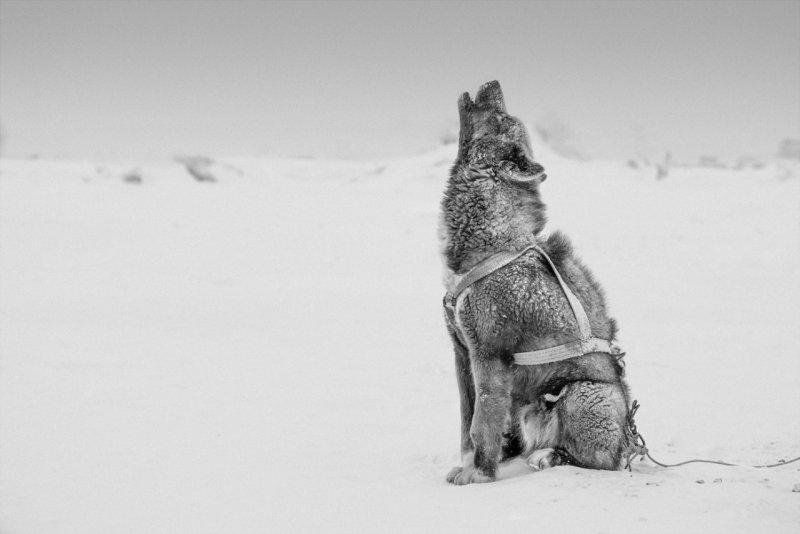 Фотограф Рагнар Аксельссон - №2